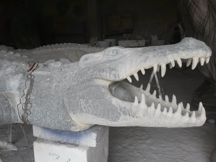 crocodile-1-jpg